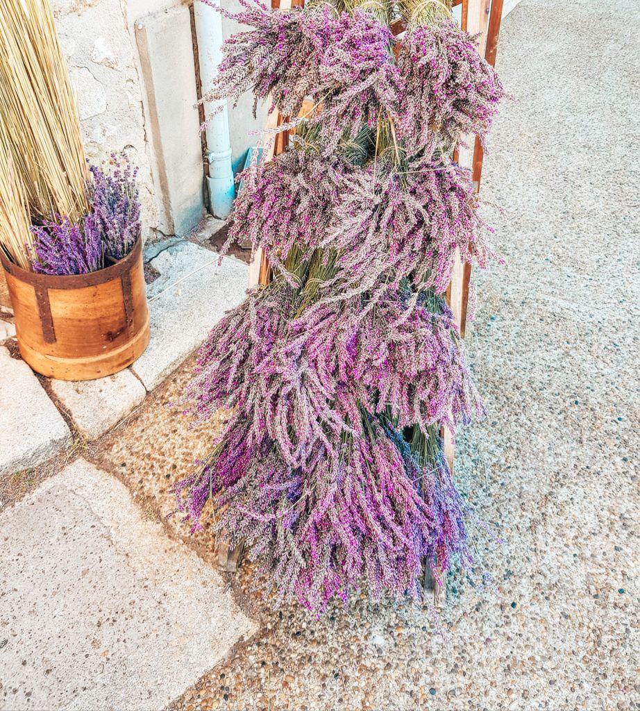 Provence Lavendel in Sault